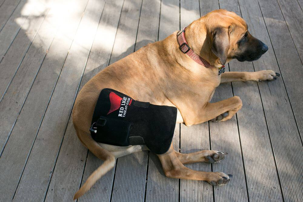 Light Therapy For Dogs Red Light Therapy
