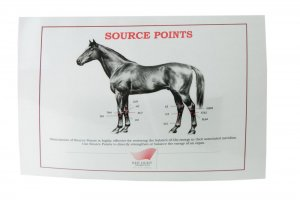 source points on a horse