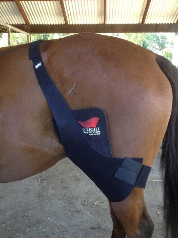 horse-leg