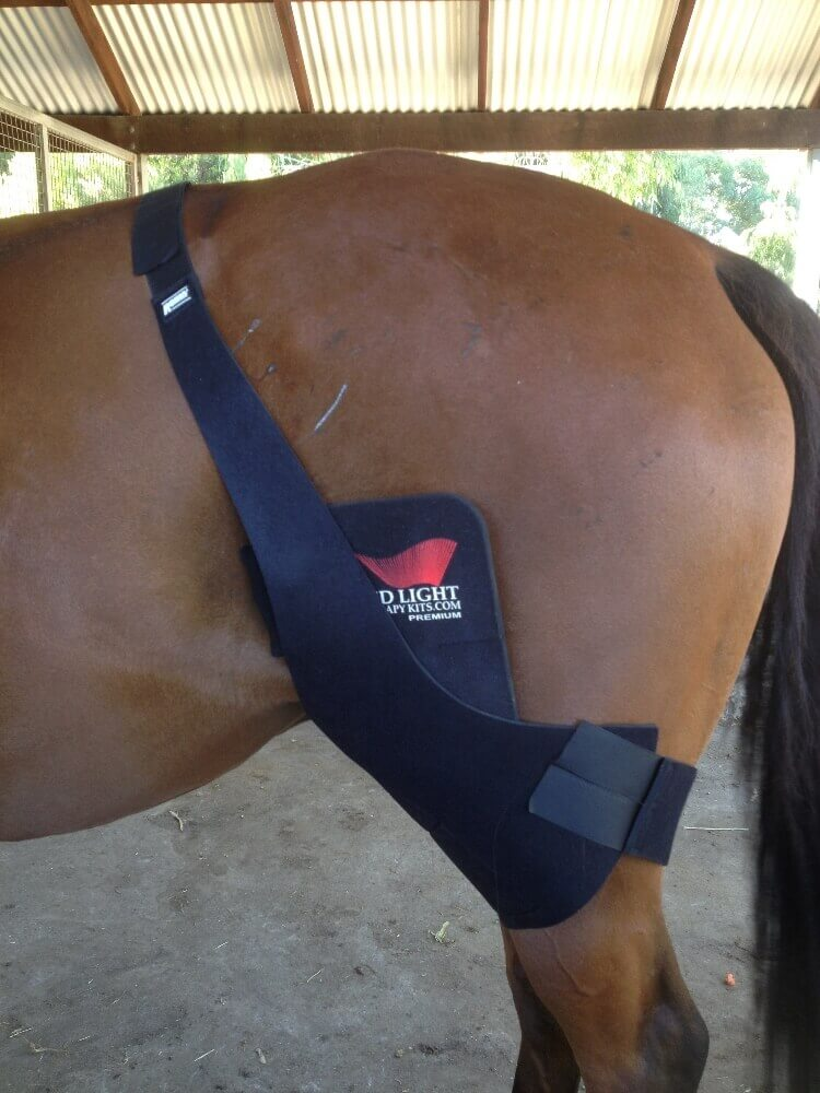 Horses Red Light Therapy