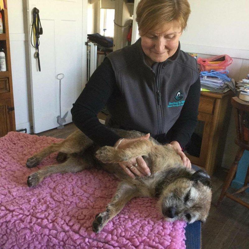 injured dog diagnosed
