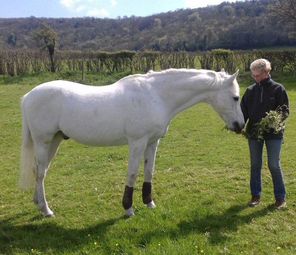 Rita Hilton Horse Dan Testimonial Image