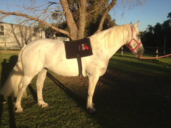 solutions for the equine market