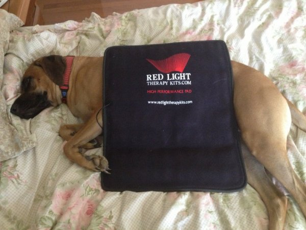 help your dog with red light