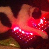 PUSSY CAT ON PAD