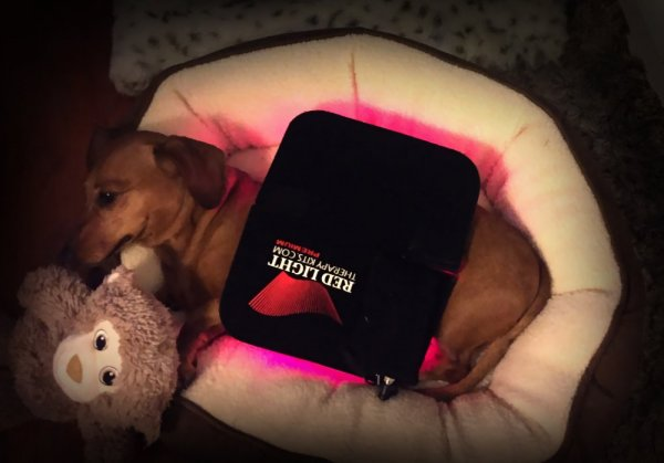 Sick Doggy cured with red light